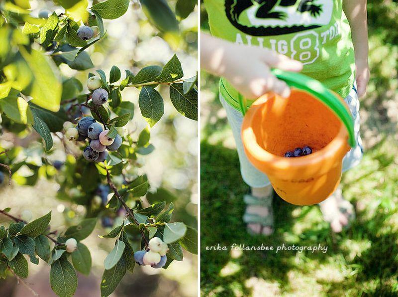 Blueberries2